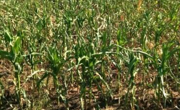 Por la sequía en Entre Ríos, piden declarar la emergencia agropecuaria