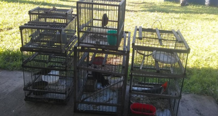 Dos personas se encontraban realizando cacería furtiva de aves autóctonas en Ruta 4