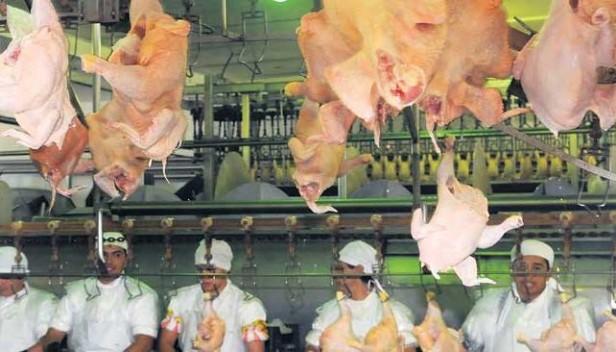 Exportaran pollos entrerrianos a Dubai