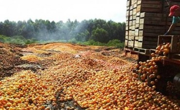 En Villa del Rosario, productores tiraron Naranjas a la basura por el bajo precio