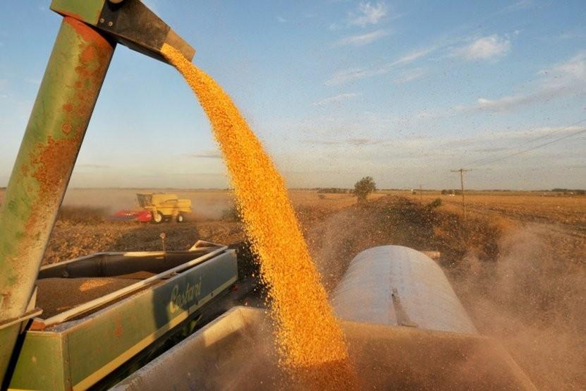 Entre Ríos lograría la mejor cosecha de maíz del siglo