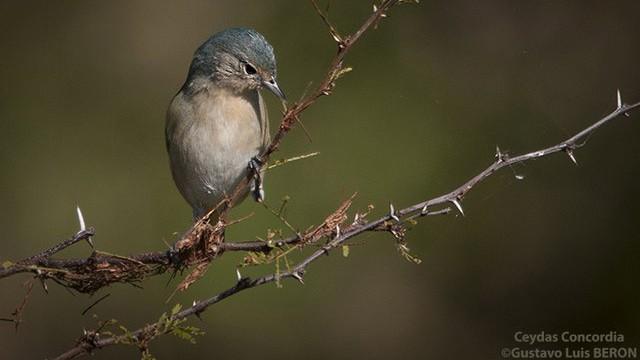 El extraño pájaro avistado por primera vez en Entre Ríos