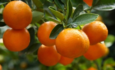 Consumidores pagan por una mandarina 19 veces más de lo que cobra el productor