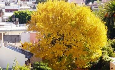 Comienza el otoño en el hemisferio sur