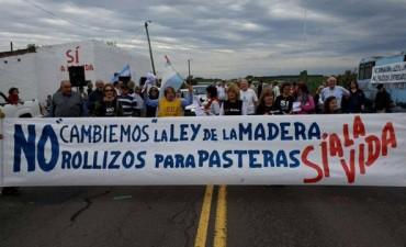 Ley de la Madera: Diputados es la última esperanza de la Asamblea