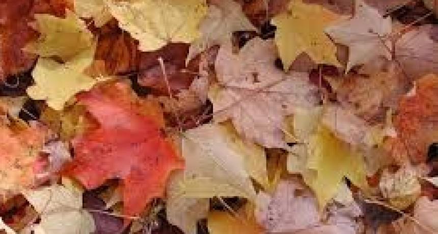 Otoño: qué hacer con las hojas secas