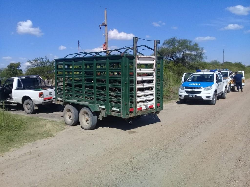 En C.Bernardi transportaban animales sin guía
