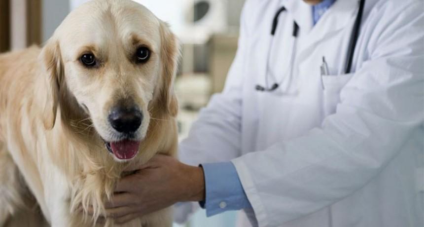 La Municipalidad de Federal inicia una campaña de Esterilización de Mascotas.