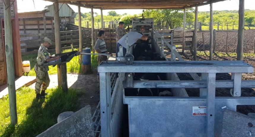 Constatacion de animales sueltos en la vía publica