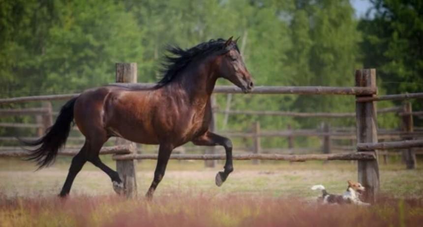 Un niño de 5 años sufre lesiones de consideración al caer de un caballo