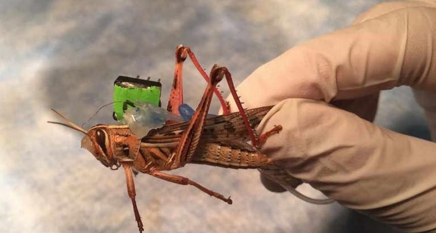 Espías robot: insectos y medusas ciborg al servicio del espionaje y la investigación