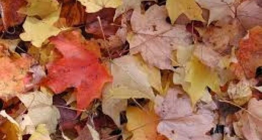 Otoño: ¿Que podemos hacer con las hojas secas?