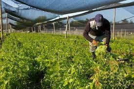 Convocatoria para productores horticolas de Colonia Federal