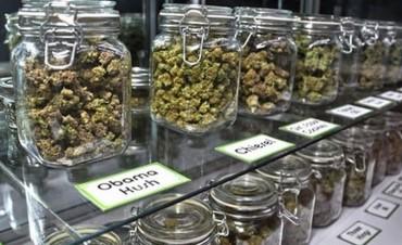Se promulgó la ley del uso medicinal del aceite de cannabis