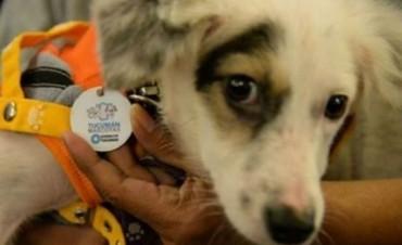 Cómo funciona el primer Registro Único de Mascotas de Argentina
