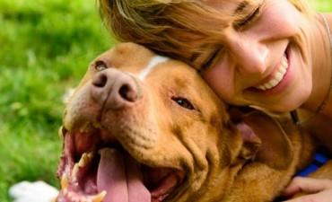 Día del animal: la responsabilidad de tener mascotas