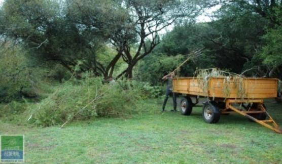 Trabajos de poda y desmalezado en Camping Municipal de Federal.