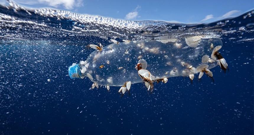 Científicos presentan un innovador estudio para proteger los océanos