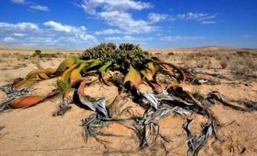 Las 5 plantas más raras del mundo