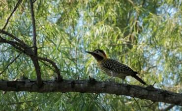 Son 230 especies de aves las que engalanan el paisaje entrerriano