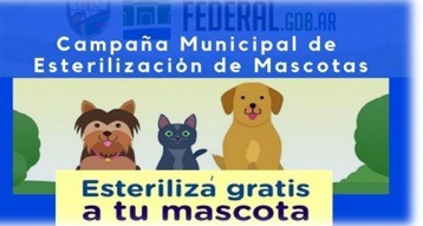CAMPAÑA MUNICIPAL DE CASTRACIÓN DE MASCOTAS