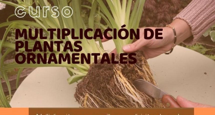 CURSO DE MULTIPLICACIÓN DE PLANTAS ORNAMENTALES