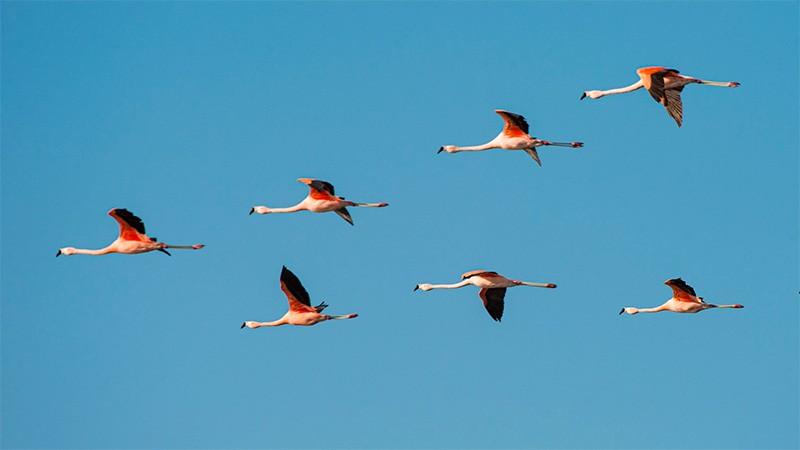 Argentina sumó otro Parque Nacional: es la reserva natural más grande del país