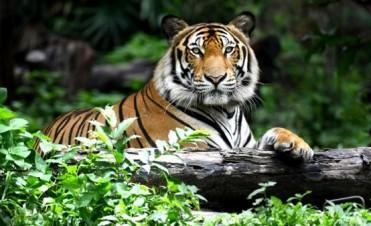 Día Mundial del Medio Ambiente: panorama sobre los efectos devastadores del tráfico ilegal de animales y los cazadores furtivos