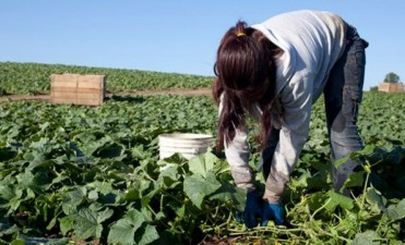 Trabajo infantil en Entre Ríos: en 2015 se registraron 56 denuncias
