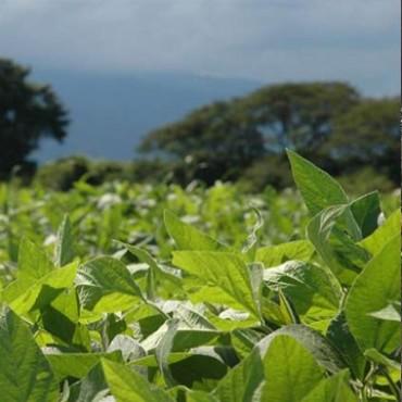 La cosecha de soja dejó pérdidas de casi $5 mil millones en Entre Ríos
