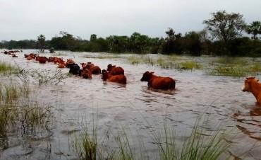 Se perderían miles de cabezas de ganado y hectáreas sembradas por inundaciones