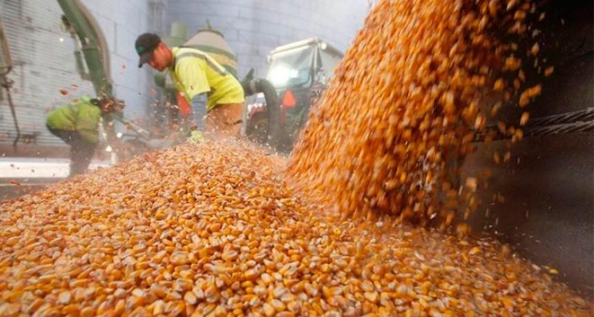 Por primera vez en 20 años, Argentina cosechará más maíz que soja