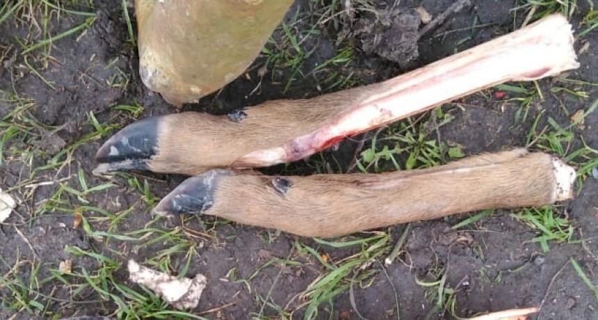 Secuestro de armas de fuego por Ley 4841 de caza y tenencia de arma ilegal