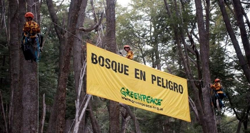 Greenpeace: