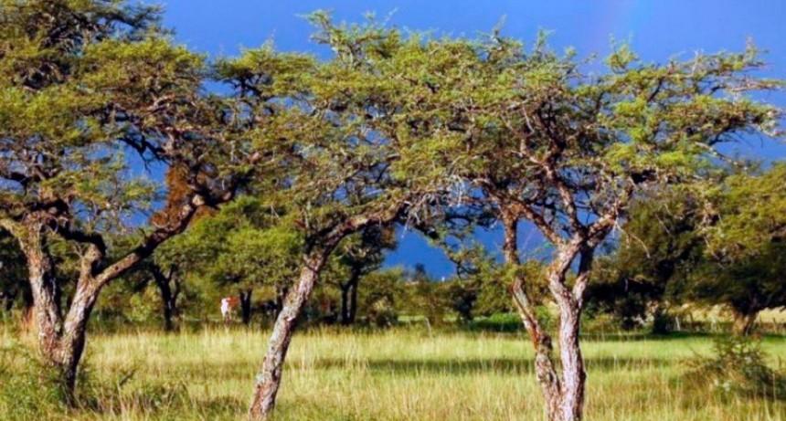 Declaran Área Natural Protegida a