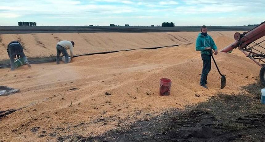 Fotos: El agradecimiento del productor al que le destruyeron los silobolsas