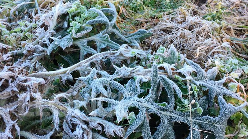 Heladas y sensaciones térmicas bajo cero: para hoy prevén poco sol y mucho frío
