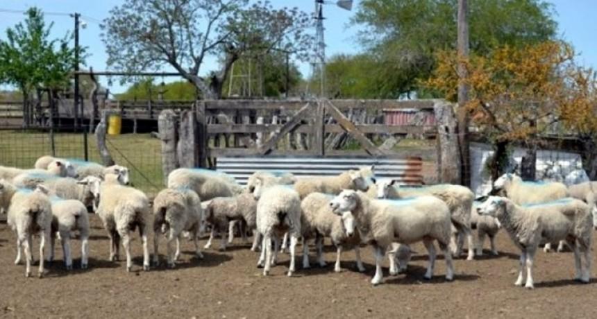 La provincia aprobó proyectos de desarrollo ovino y caprino por 9,5 millones de pesos. Beneficios para productores de Federal