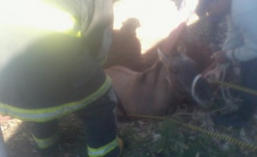 Bomberos rescataron a un equino en Colonia Federal