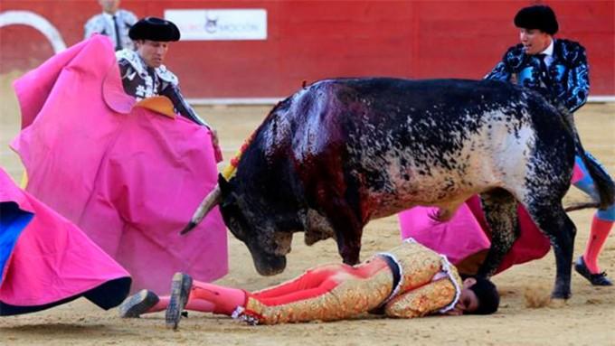 VIDEO: Torero murió tras brutal cornada en un festival en España