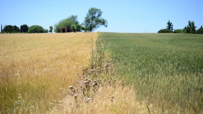 Niña debilitada: Estiman que la sequía no será tan intensa como se preveía