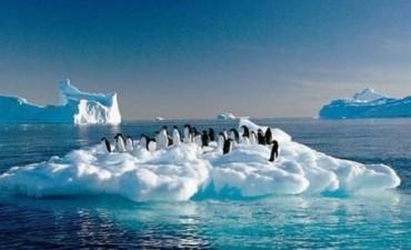 Los pingüinos de la Antártida podrían desaparecer por efecto del cambio climático