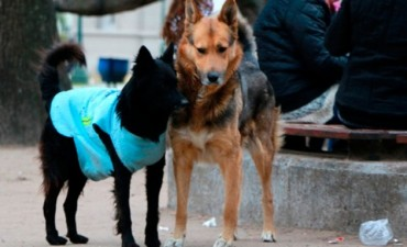 Hizo confeccionar chalecos para abrigar a los perros callejeros