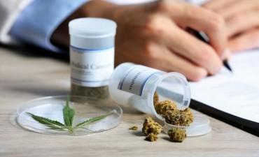 Comenzará la producción de cannabis medicinal en Argentina