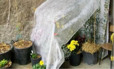 El frío, ese agente que daña tanto a las plantas