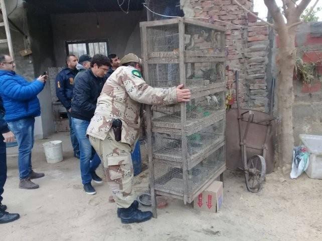 El tráfico ilegal de aves mueve unos 600 millones de pesos en la provincia
