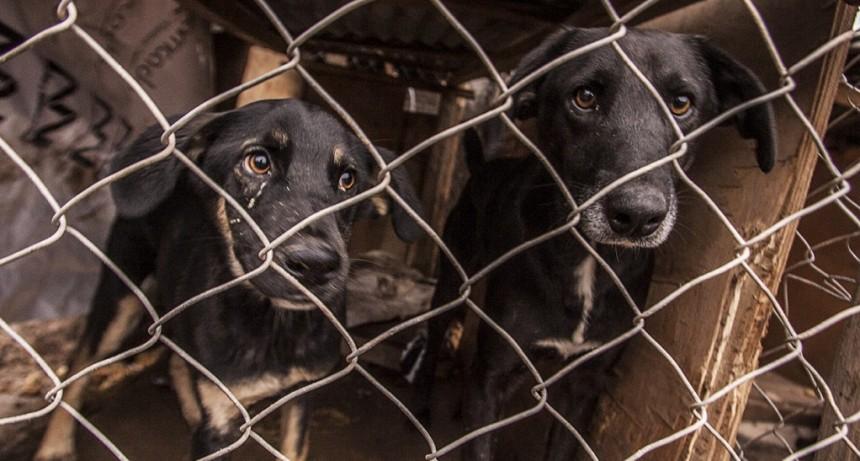 El porque de la negativa del Bloque de Concejales de la Minoría al traslado del refugio canino