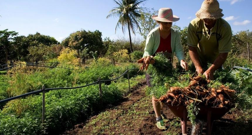 Federal : Productores con Monotributo Social Agropecuario deben actualizar sus datos