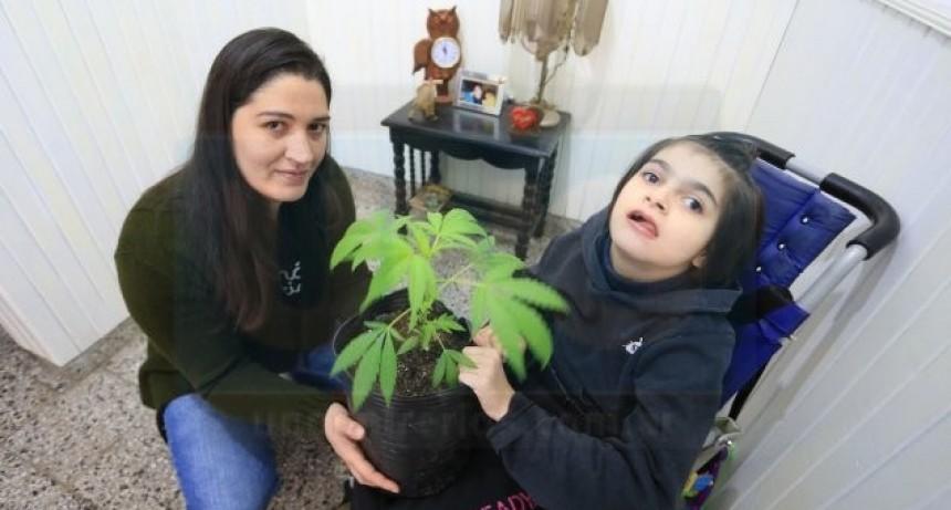 La ley de cannabis medicinal, entre el vacío legal y la urgencia de los pacientes