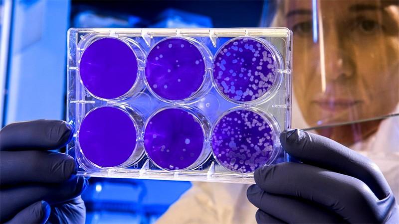 Se registraron 10 nuevos casos de coronavirus: Son de cuatro departamentos